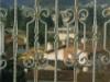 thumbs 25 Metalinės kalviškos tvoros